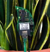 פטנט חדש: מדברים עם הצמחים באמצעות טוויטר והרשת הביתית