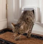 """חדש: """"דלת סלקטיבית"""" שמאפשרת לחתול שלכם להיכנס הביתה באמצעות כרטיס חכם"""