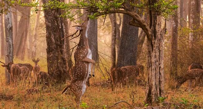 במקום התשיעי: אייל אוכל את ארוחת הבוקר שלו בפארק הלאומי נגארהול שבהודו. צילום: יאת'ין ס. קרישנפה