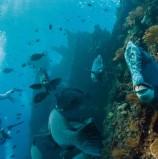 חדש ב-Street View: סיורים מתחת לפני המים