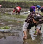 עלי באבא תכשיר מיליון בני נוער בכפרים של סין