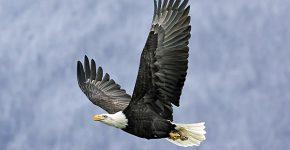 גם הדבר היפה הזה נמצא בסכנת הכחדה. צילום: BigStock