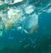 דל משיקה יוזמה גלובלית לצמצום זיהום הפלסטיק בים