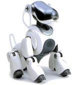 הרובוט-כלב שמפיג את תחושת הבדידות