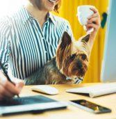 יום הכלב הבינלאומי: בהיי-טק חוגגים עם החברים על ארבע במשרד
