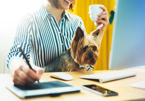 כלבים בעבודה. צילום: BigStock