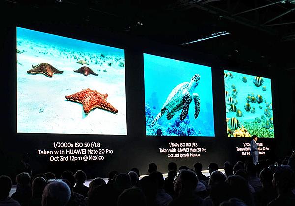 לאלה שצוללים, הפתעה מתחת למים: גם שם ה-Mate 20 מצלם במלוא תפארתו. צילום: פלי הנמר