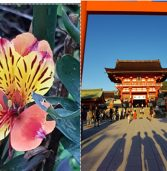 במסגרת כנס הלקוחות, GIV Solutions יוצאת בקול קורא – תחרות צילומים מקוריים