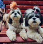 אפליקציית GetPet: הטינדר למציאת כלב לאימוץ מעמותות