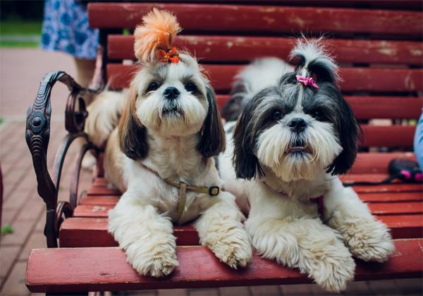 כלבים מחכים לאימוץ שלך. צילום: BigStock