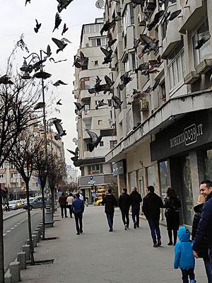רחוב בבוקרשט. צילום: יניב הלפרין