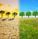 משבר האקלים: גוגל ואמזון התחייבו לעשות יותר ועובדיהן הצטרפו לצעדות