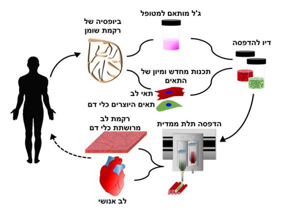 הסבר על התהליך