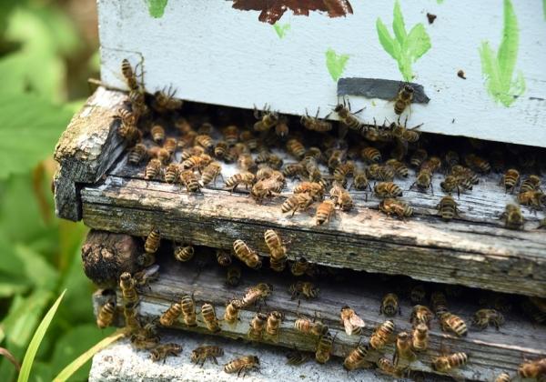הכוורות יחוברו לענן והדבורים יישמרו מכל משמר. צילום אילוסטרציה: BigStock