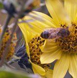 איך הטכנולוגיה תציל את הדבורים ומה הקשר לענן של אורקל?