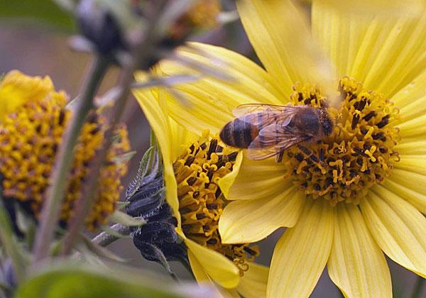 """טכנולוגיה בשירות הדבורים. צילום: יח""""צ"""
