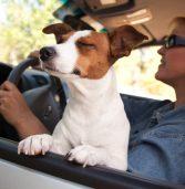 """""""מצב כלב"""" במכוניות טסלה כמעט גרם למות גור – הבאג יתוקן"""