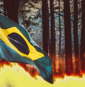 השריפות הנוראיות באמזונס הקפיצו את השימוש במנוע החיפוש אקוזיה ב-1,150%