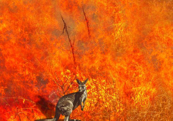 אוסטרליה בוערת. יותר מחצי מיליארד בעלי חיים כבר מתו באסון. צילום אילוסטרציה: BigStock