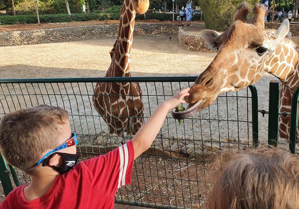 """ילד נס מאכיל ג'ירפה באירוע של החברה בספארי. צילום: יח""""צ"""