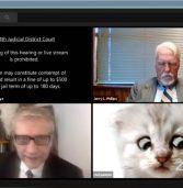 קצת צחוקים בעידן הקורונה: פילטר החתלתול שכבש את העולם
