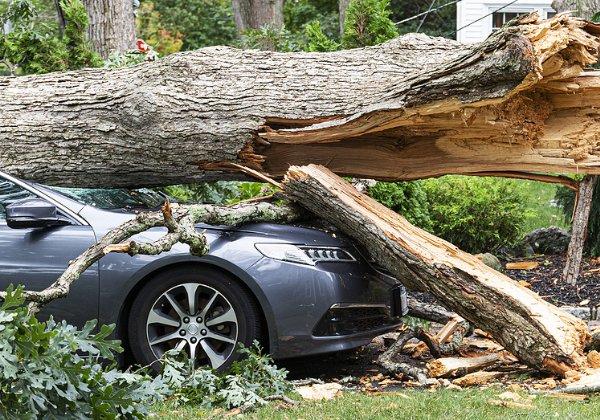 """התנגשו בעץ אחרי ש""""טסו"""" ותיעדו את הנסיעה. צילום אילוסטרציה: BigStock"""