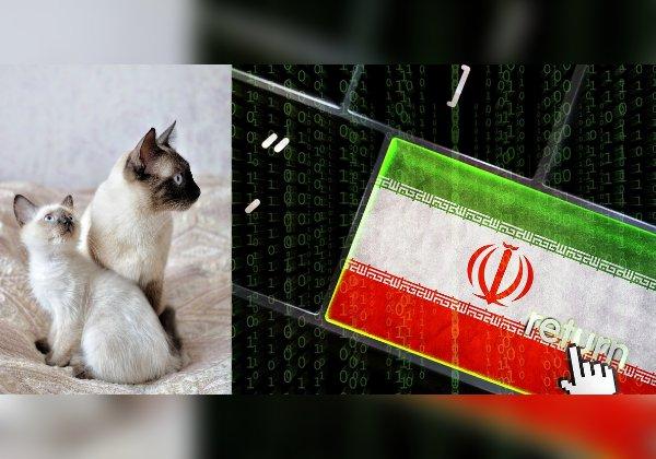 ההאקרים האיראנים החתלתולים הסיאמיים. עיבוד אילוסטרציה, מקור: BigStock